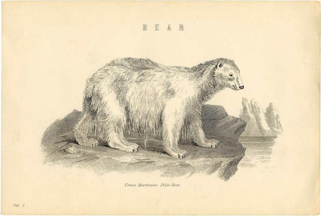 Isbjørn fra 1860