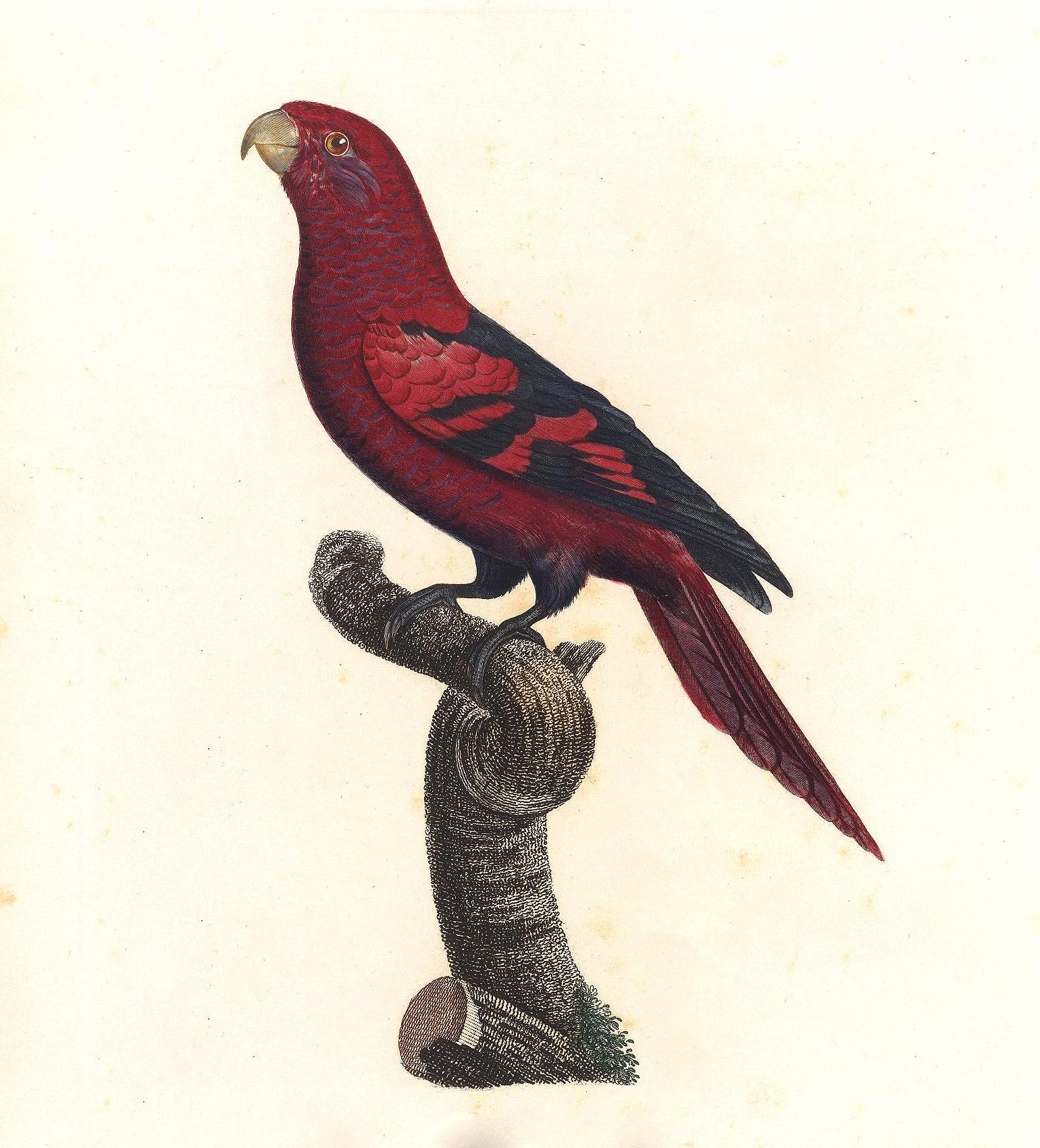 papegøye 5