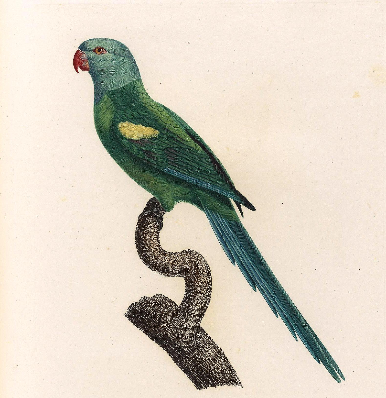 papegøye 6