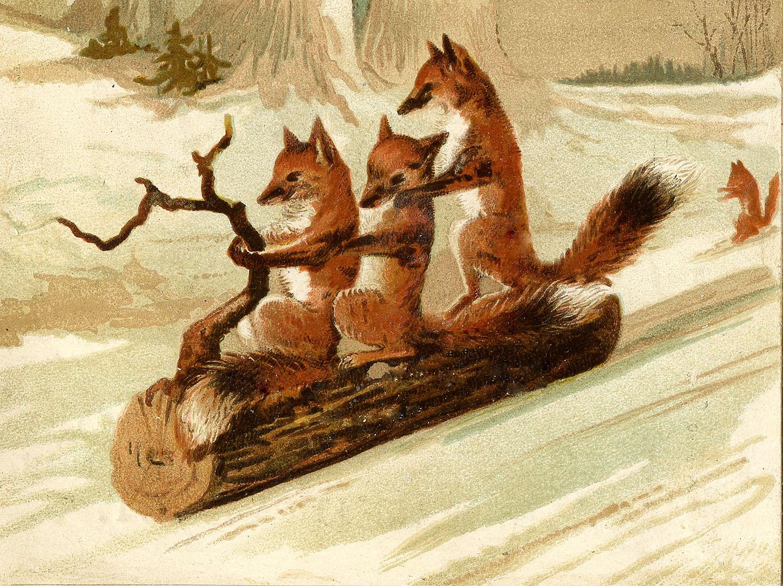REVUNGER I LEK: Noe så nydelig som rev som aker i snøen! Dette kan bli et nydelig postkort.