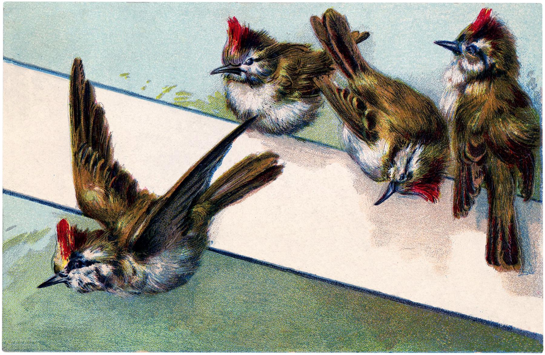 Vintage-Birds-Label-Image-GraphicsFairy