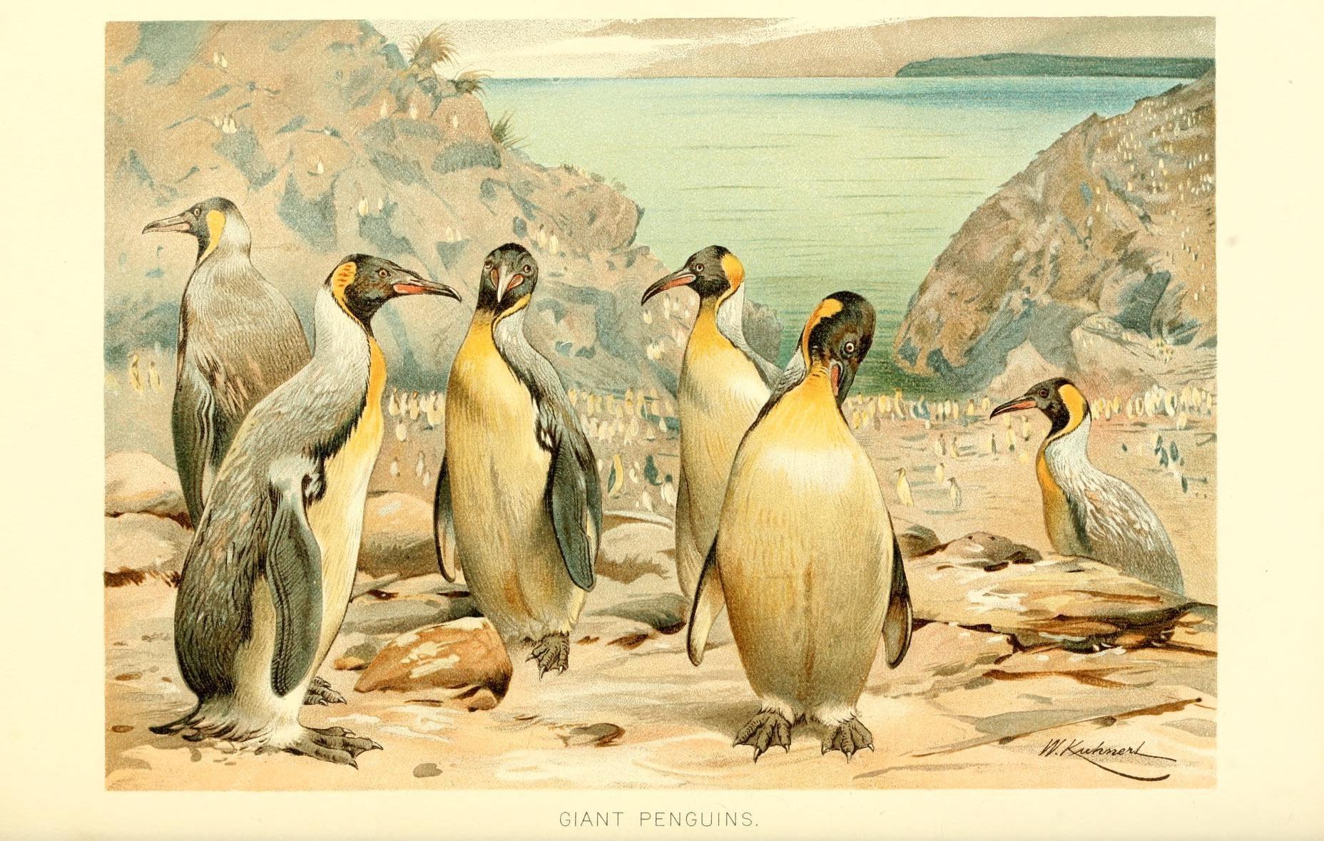 pingvinfamilie