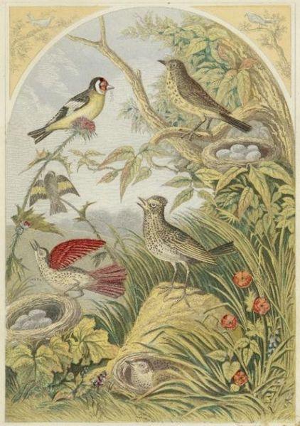 422px-Vintage_Bird_Book_Plate_Image